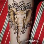 henna hena ruka slon